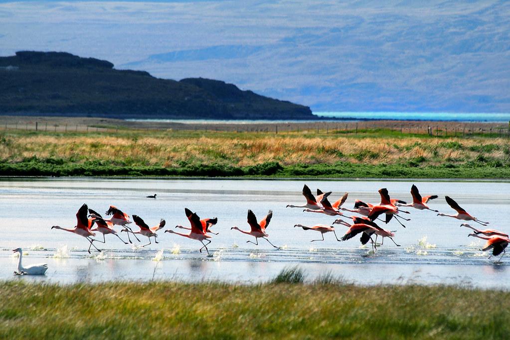 patagonia decembrie